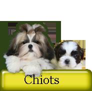 Chiots